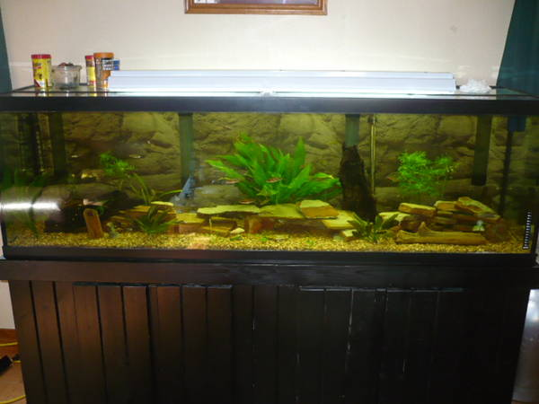6 ft 125 gal glass tank 125 gal tank dimensions 2017 for 125 gallon fish tank stand