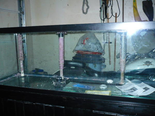 Cichlid forum new fish tank for Used fish tanks for sale on craigslist